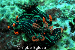 Mating nudis(t)?   by Abbe Bglcsa 